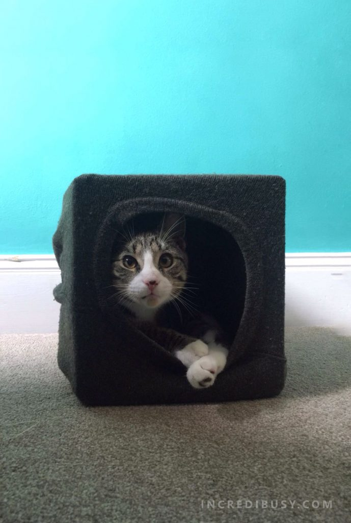 Kipper-in-a-DIY-cat-cave